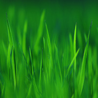 Nature's Rainbow (Mindfulness Meditation for Teens) album Track Four Green - Grass Download image
